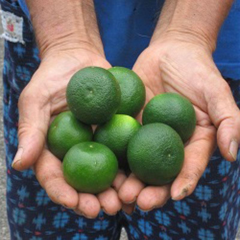 organi japanese citrus fruits