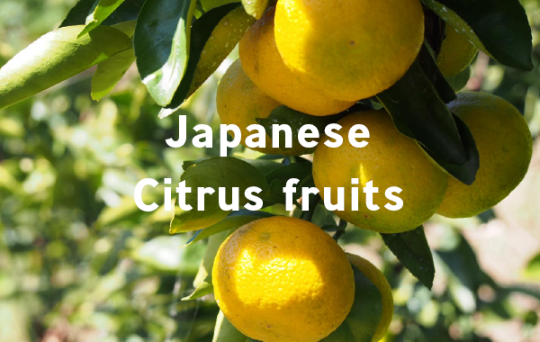 Japanese Citrus fruits